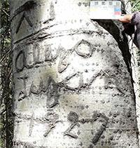 Signature of Alejo Luján on and Aspen tree