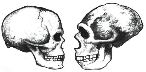 Comparison between modern (left) and archaic (right) Homo sapiens skulls.