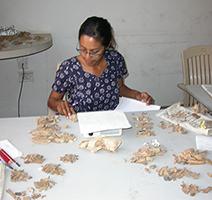 Zooarchaeologist Radhika Bauer Analyzing Faunal Remains