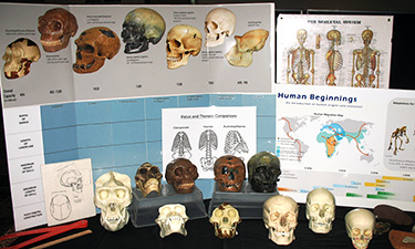 Picture of posters and skulls